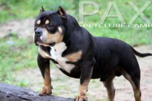 PAXPETCLUBE