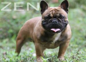 zen frenchie bulldog blue carrier