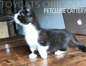 toy cats original petclube mini gato